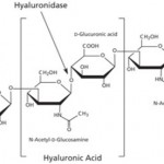 hyaluronic acid molecules